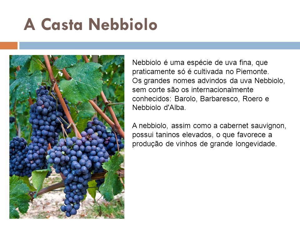 A Casta Nebbiolo Nebbiolo é uma espécie de uva fina, que praticamente só é cultivada no Piemonte. Os grandes nomes advindos da uva Nebbiolo, sem corte