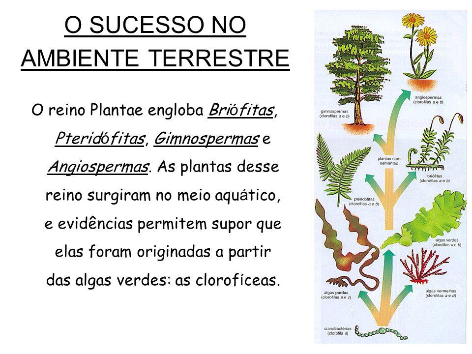O SUCESSO NO AMBIENTE TERRESTRE O reino Plantae engloba Bri ó fitas, Pterid ó fitas, Gimnospermas e Angiospermas.