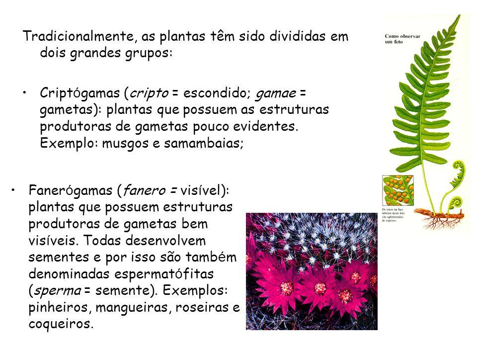 Tradicionalmente, as plantas têm sido divididas em dois grandes grupos: Cript ó gamas (cripto = escondido; gamae = gametas): plantas que possuem as estruturas produtoras de gametas pouco evidentes.
