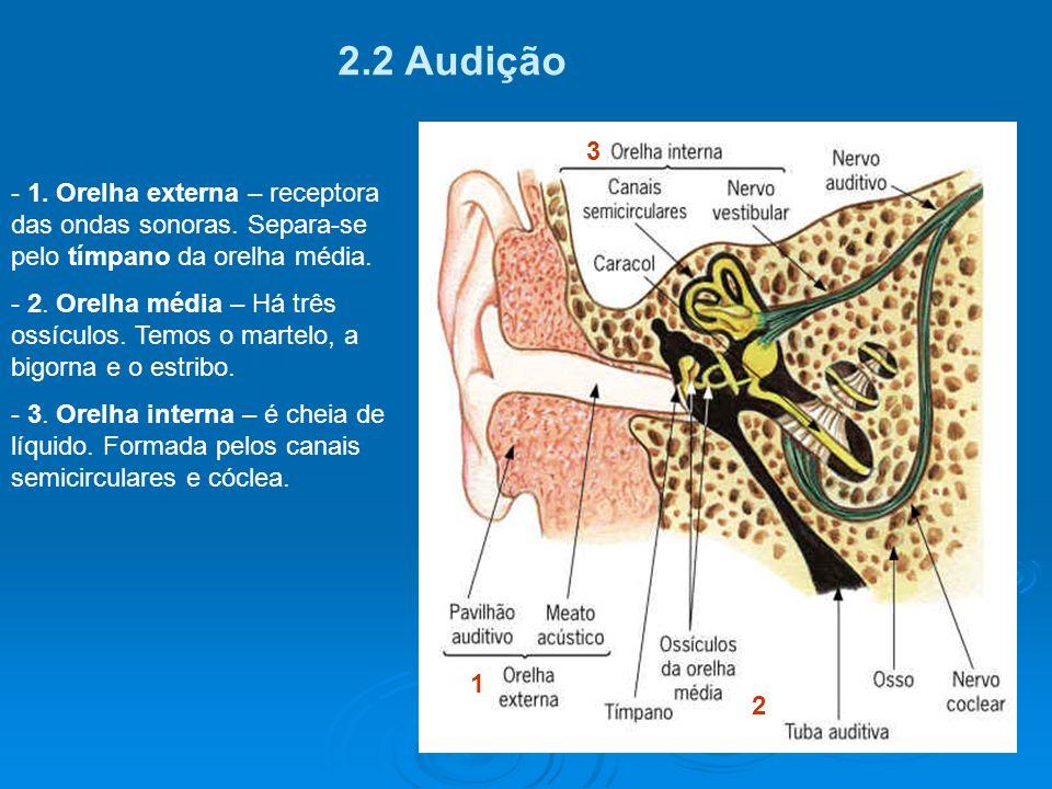 2.1 A pele é a sede do tato. - Corpúsculos táteis (recep- tores sensitivos). - A pele protege contra choques mecânicos, perda excessiva de água e agen