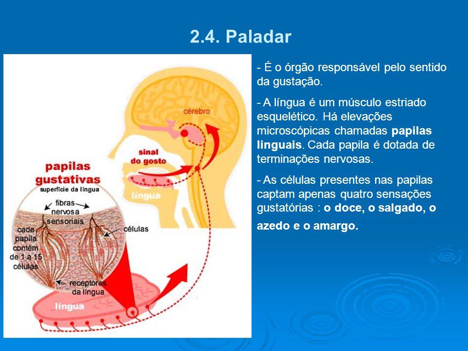 2.3 Visão -Esclera é a parte branca do olho. - Coróide membrana interna, rica em vasos. Forma a íris. - Íris – Parte colorida do olho, orifício centra