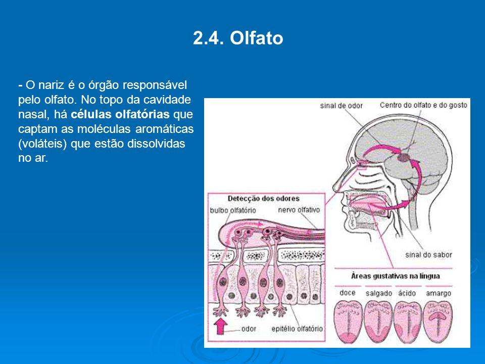 2.4.Olfato - O nariz é o órgão responsável pelo olfato.