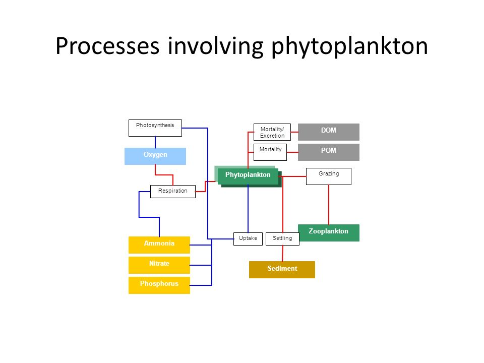 Processes involving phytoplankton Phytoplankton Oxygen DOM POM Zooplankton Photosynthesis Grazing Mortality/ Excretion Sediment Settling Mortality Amm