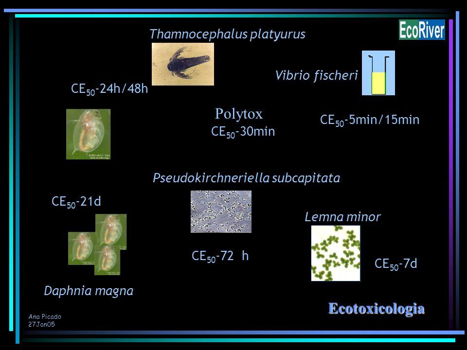 Ana Picado 27Jan05 CE 50 -24h/48h CE 50 -21d CE 50 -7d CE 50 -5min/15min Ecotoxicologia Ecotoxicologia Daphnia magna Vibrio fischeri Lemna minor CE 50