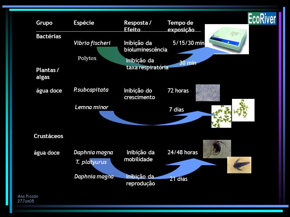 Ana Picado 27Jan05 Plantas / algas Vibrio fischeri Bactérias GrupoEspécieTempo deResposta / Efeitoexposição Inibição da bioluminescência 5/15/30 min á
