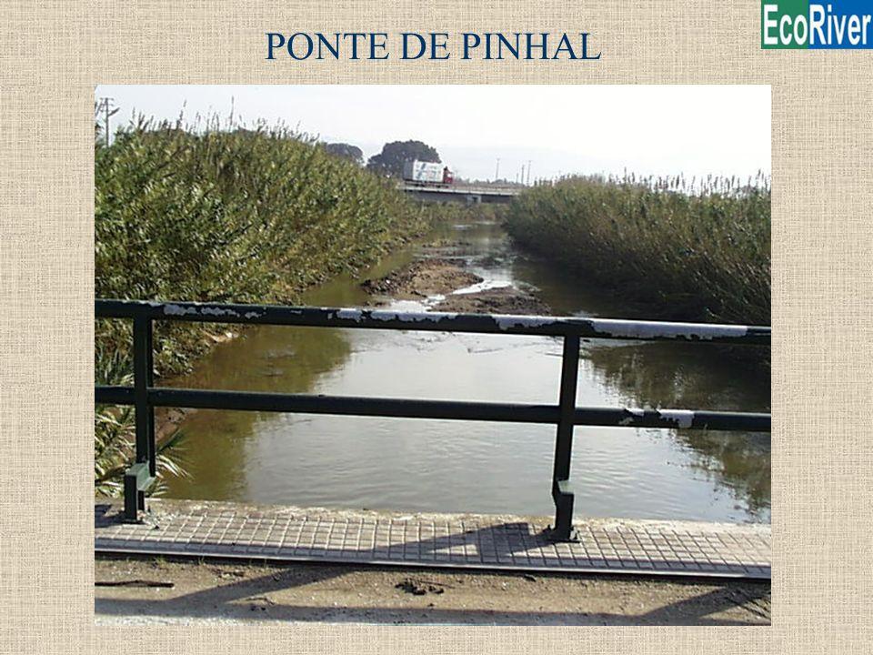 PONTE DE PINHAL