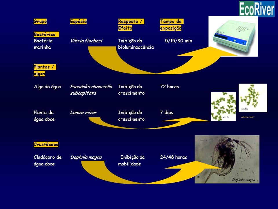 Lemna minor controlo MCPA Daphnia magna Tempo deGrupo EspécieResposta / Efeitoexposição Bactérias Bactéria marinha Vibrio fischeriInibição da biolumin