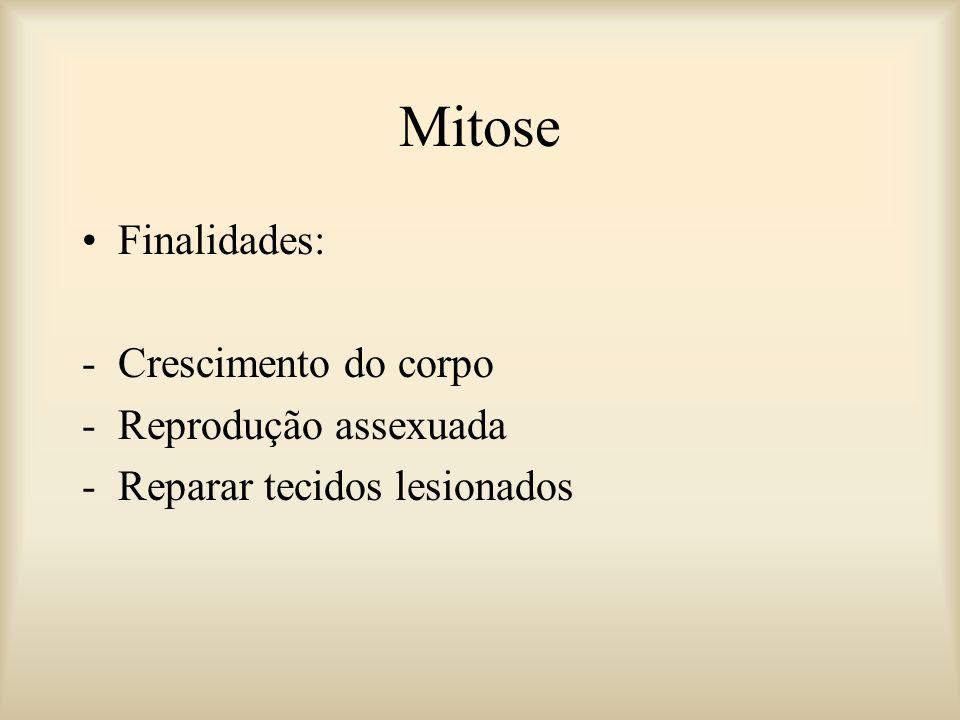 Finalidades: -Crescimento do corpo -Reprodução assexuada -Reparar tecidos lesionados Mitose