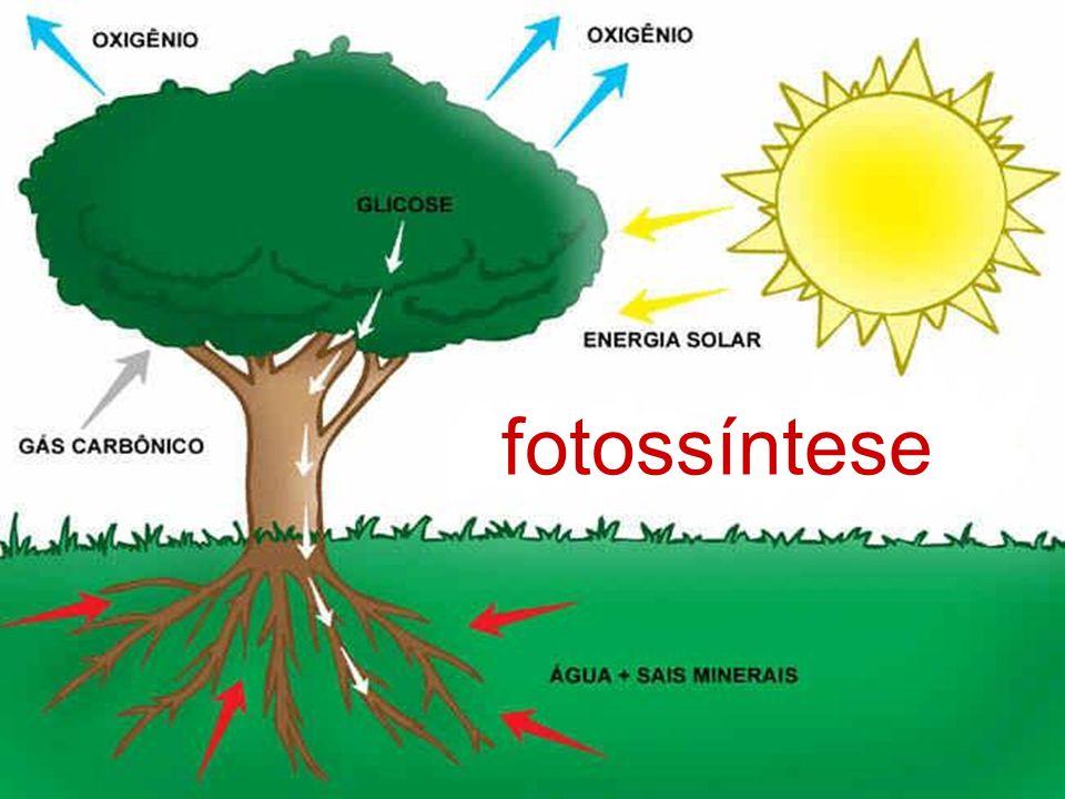 FOTOSSÍNTESE Constitui um fenômeno biológico altamente complexo, a fotossíntese apresenta uma tal sofisticação bioquímica que nem a mais avançada tecnologia desenvolvida pela ciência conseguiu jamais imitar.