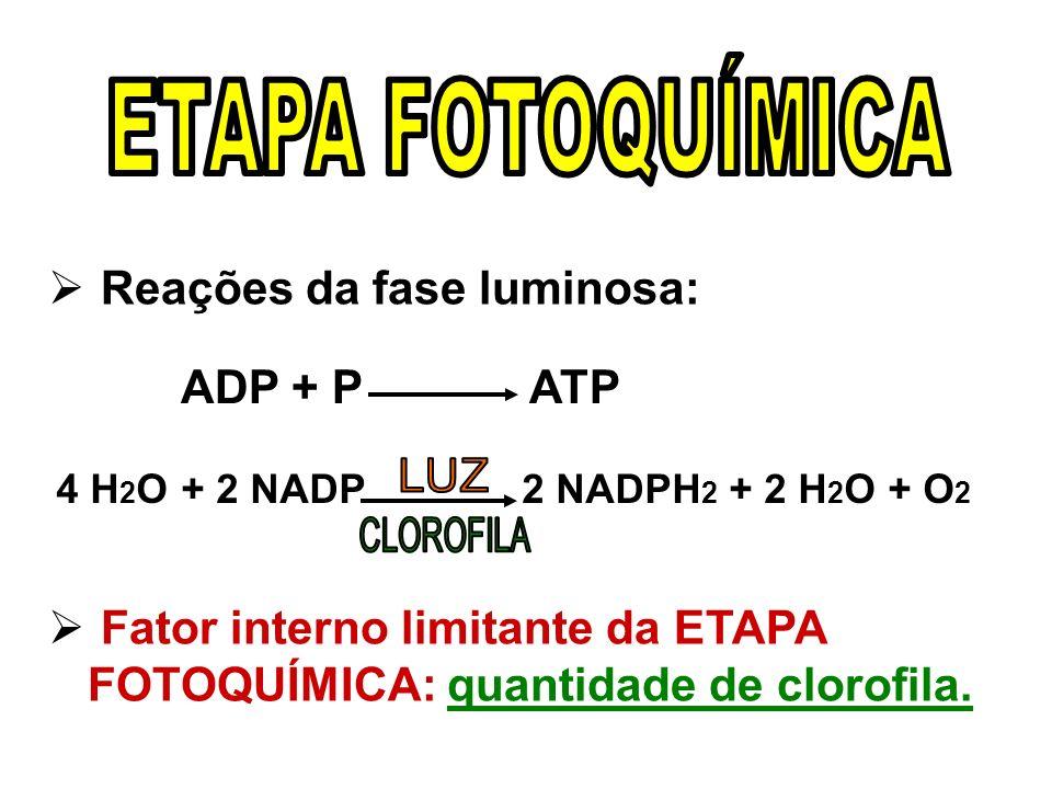 Reações da fase luminosa: ADP + P ATP 4 H 2 O + 2 NADP 2 NADPH 2 + 2 H 2 O + O 2 Fator interno limitante da ETAPA FOTOQUÍMICA: quantidade de clorofila