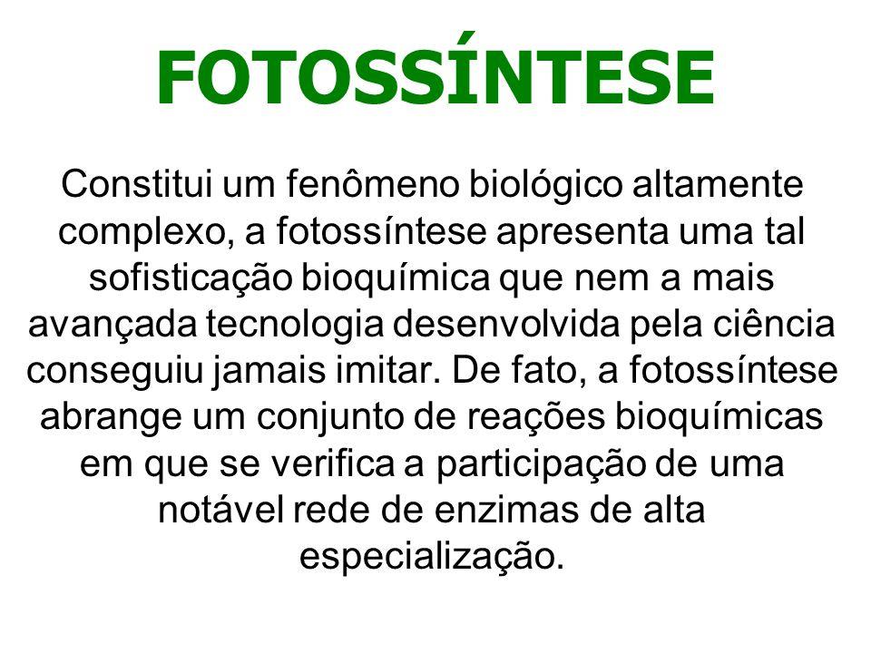 FOTOSSÍNTESE Constitui um fenômeno biológico altamente complexo, a fotossíntese apresenta uma tal sofisticação bioquímica que nem a mais avançada tecn