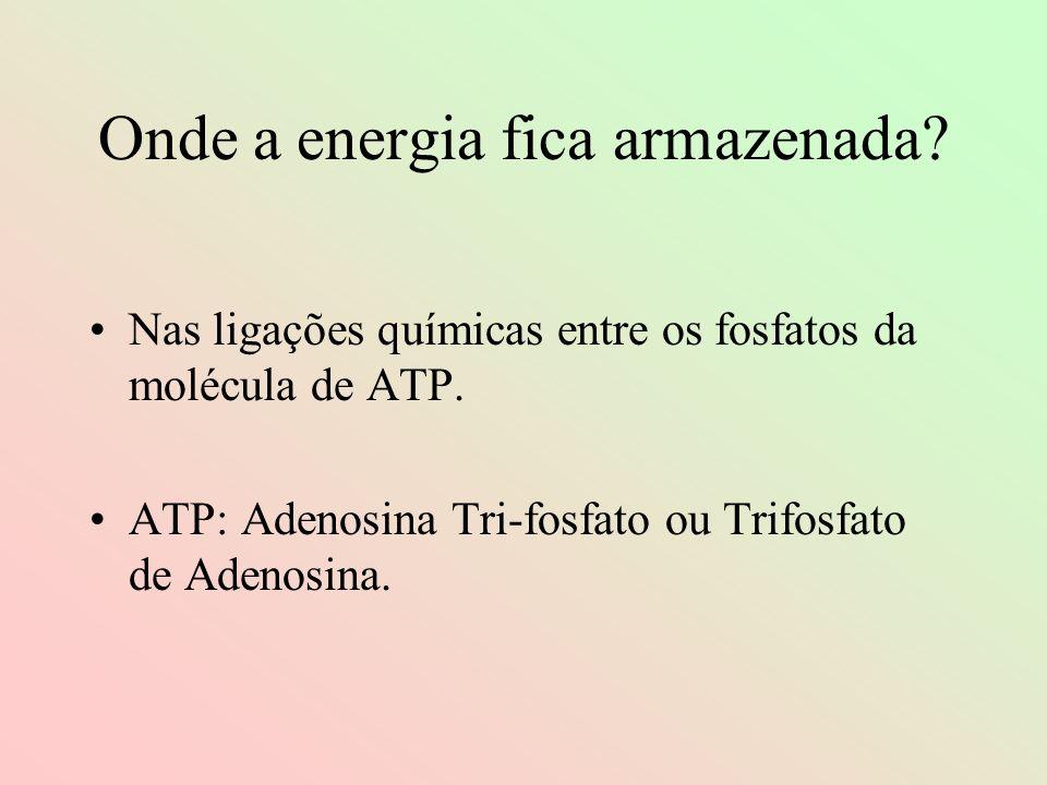 Onde a energia fica armazenada? Nas ligações químicas entre os fosfatos da molécula de ATP. ATP: Adenosina Tri-fosfato ou Trifosfato de Adenosina.