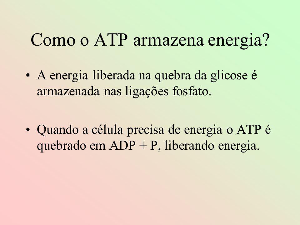 Como o ATP armazena energia? A energia liberada na quebra da glicose é armazenada nas ligações fosfato. Quando a célula precisa de energia o ATP é que