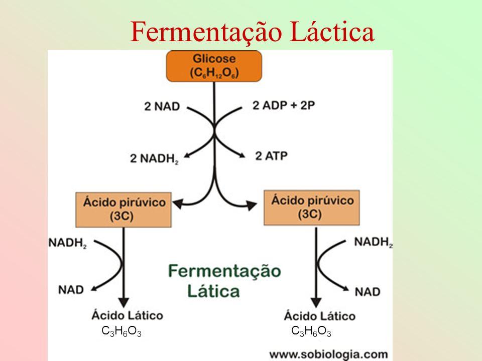 Fermentação Láctica C3H6O3C3H6O3 C3H6O3C3H6O3