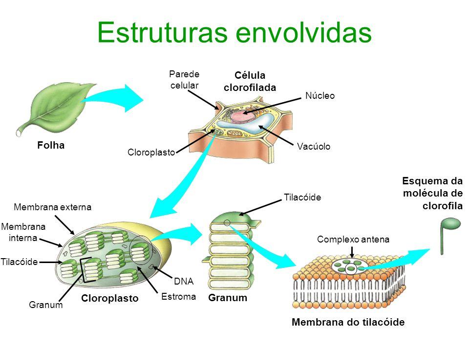 A energia na célula