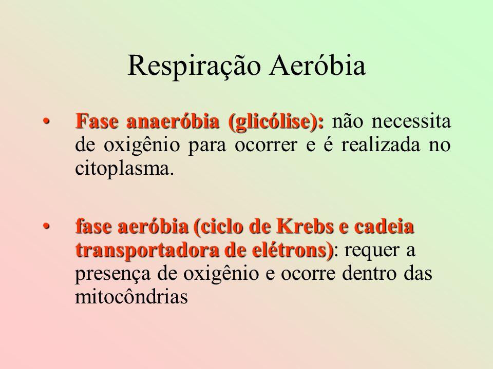 Respiração Aeróbia Fase anaeróbia (glicólise):Fase anaeróbia (glicólise): não necessita de oxigênio para ocorrer e é realizada no citoplasma. fase aer