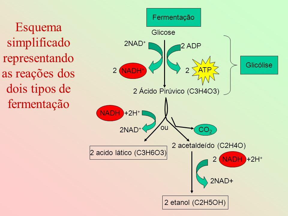 Esquema simplificado representando as reações dos dois tipos de fermentação Fermentação +2H + NADH Glicose 2 ADP ATP 2 Glicólise 2NAD + NADH + 2 2 Áci
