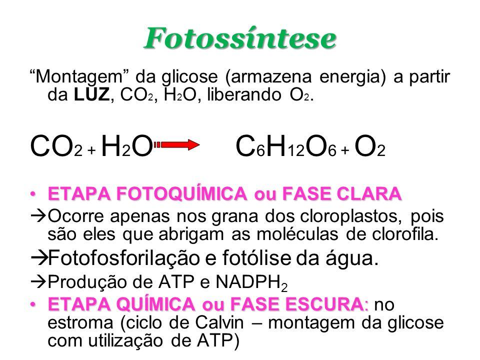 NADH 2 FAD 2 e - +O O -- H + H2OH2O + NAD 2 e - + ATPs Cadeia Transportadora de Elétrons