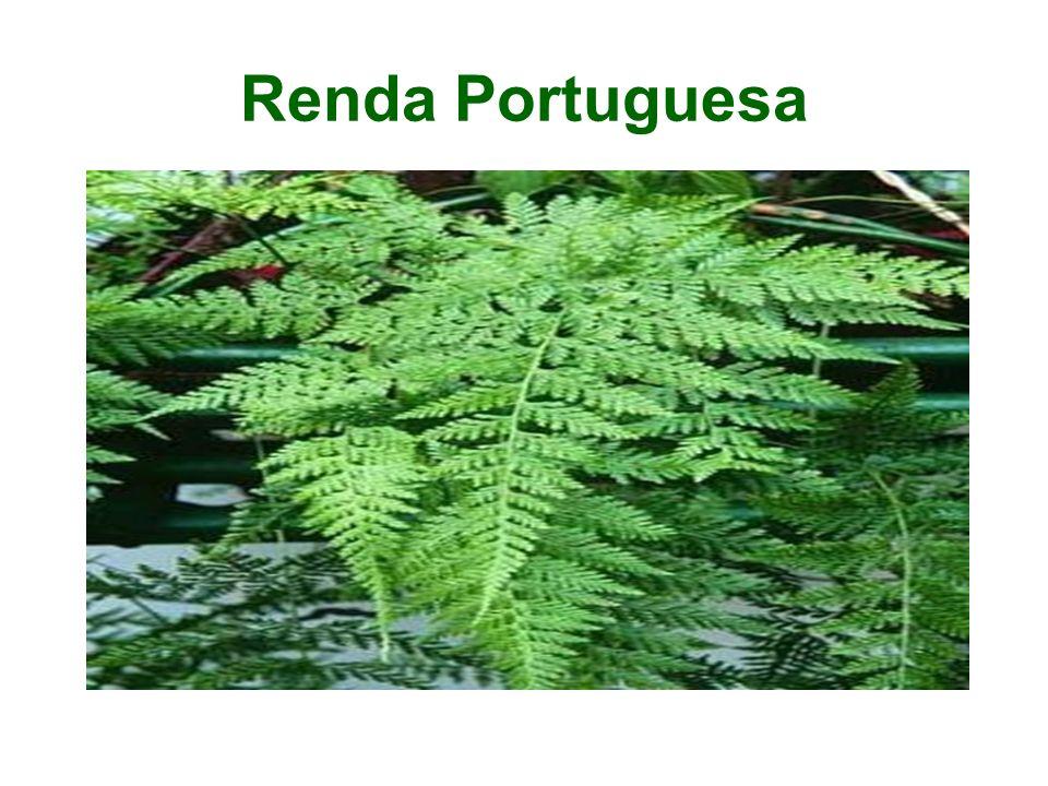Renda Portuguesa