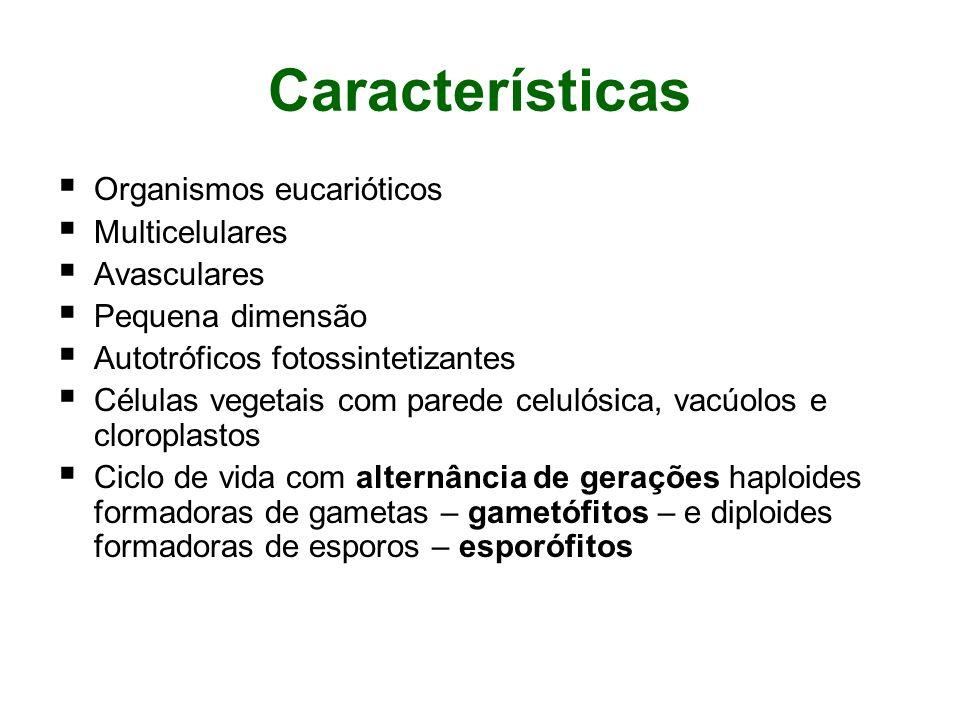 Características Organismos eucarióticos Multicelulares Avasculares Pequena dimensão Autotróficos fotossintetizantes Células vegetais com parede celuló