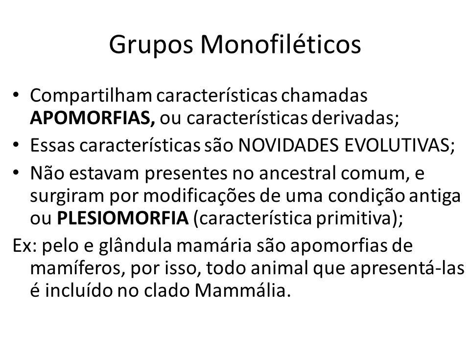 Grupos Monofiléticos Compartilham características chamadas APOMORFIAS, ou características derivadas; Essas características são NOVIDADES EVOLUTIVAS; N