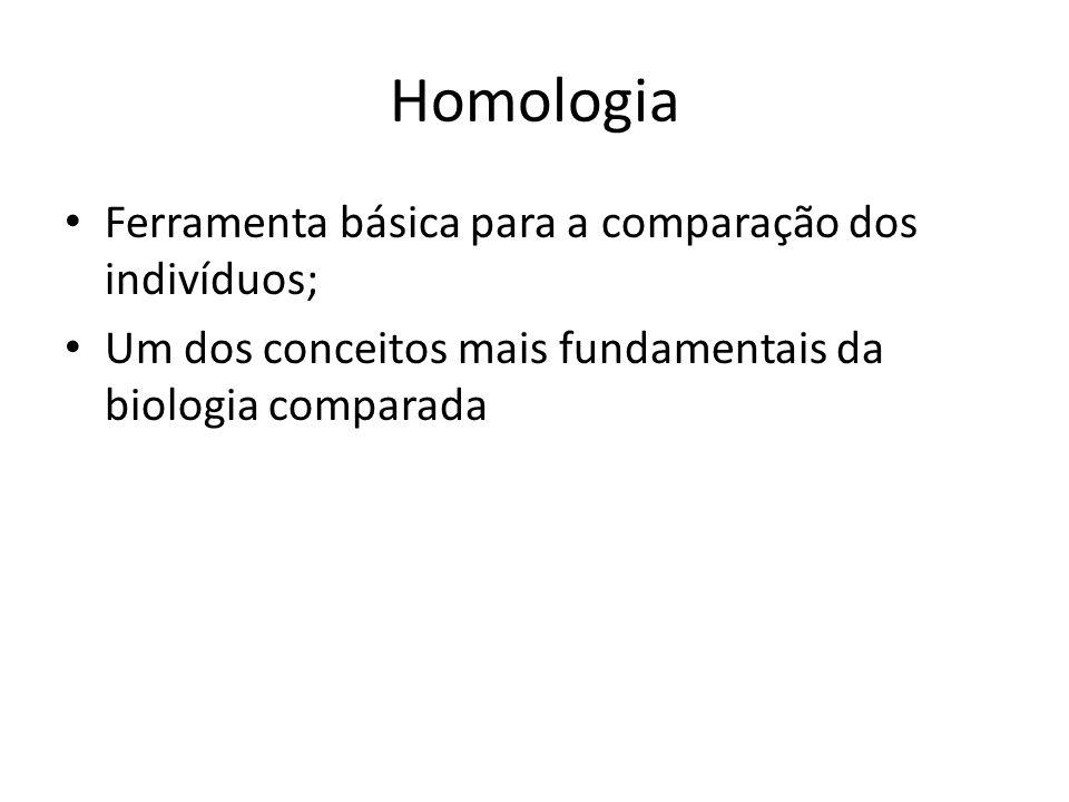 Homologia Ferramenta básica para a comparação dos indivíduos; Um dos conceitos mais fundamentais da biologia comparada