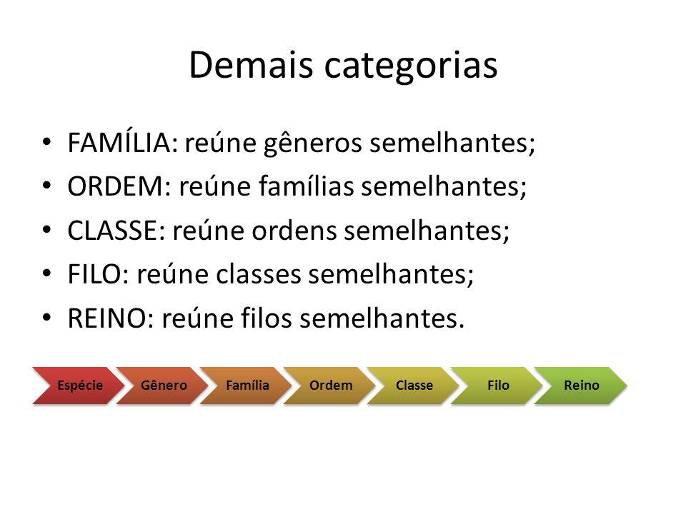 Demais categorias FAMÍLIA: reúne gêneros semelhantes; ORDEM: reúne famílias semelhantes; CLASSE: reúne ordens semelhantes; FILO: reúne classes semelha