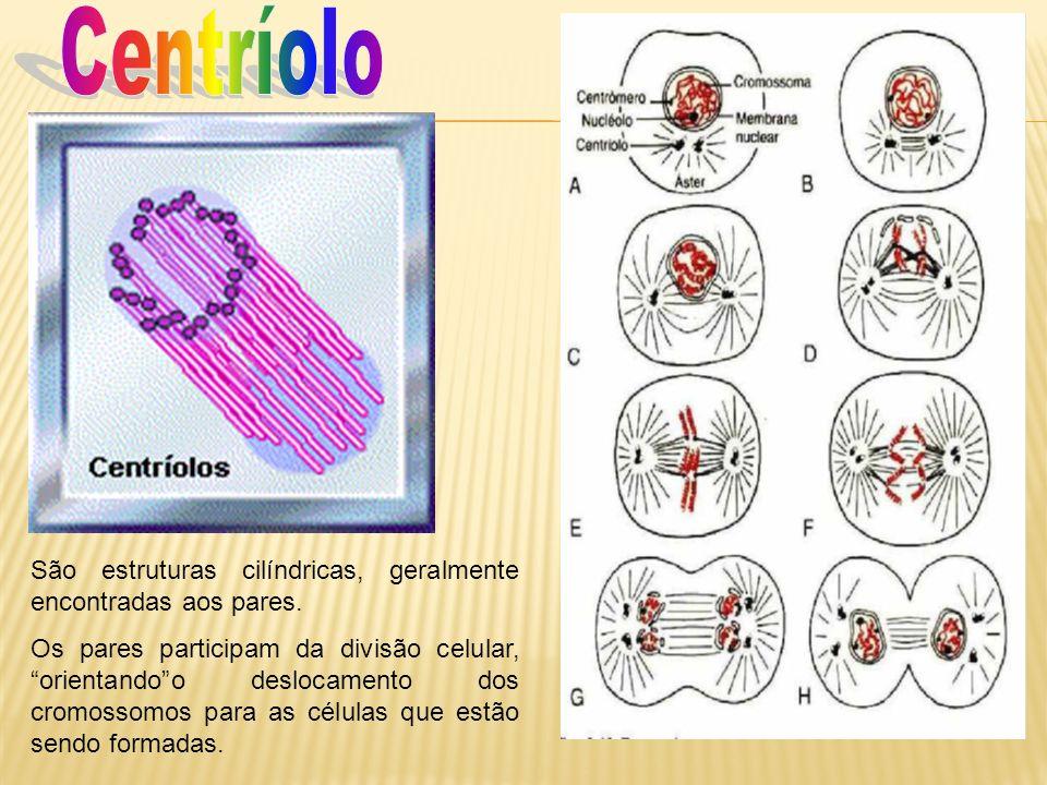 São estruturas cilíndricas, geralmente encontradas aos pares. Os pares participam da divisão celular, orientandoo deslocamento dos cromossomos para as