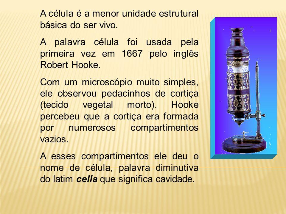 A célula é a menor unidade estrutural básica do ser vivo. A palavra célula foi usada pela primeira vez em 1667 pelo inglês Robert Hooke. Com um micros