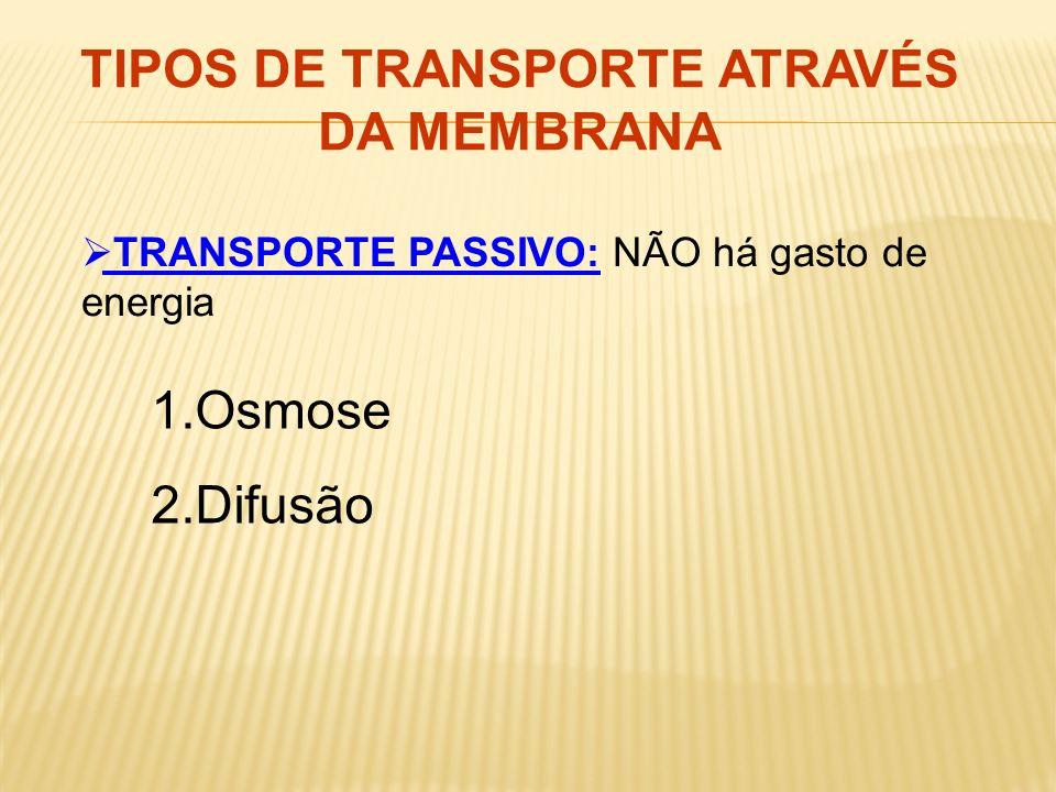 TIPOS DE TRANSPORTE ATRAVÉS DA MEMBRANA TRANSPORTE PASSIVO: NÃO há gasto de energia 1.Osmose 2.Difusão
