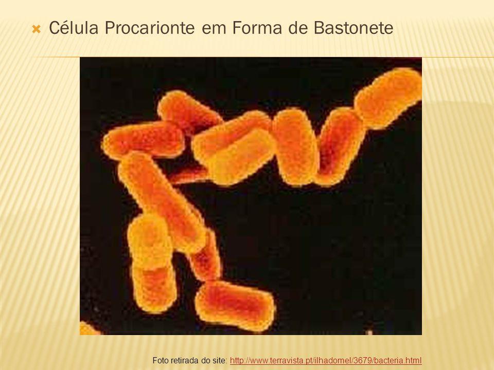 Célula Procarionte em Forma de Bastonete Foto retirada do site: http://www.terravista.pt/ilhadomel/3679/bacteria.htmlhttp://www.terravista.pt/ilhadome