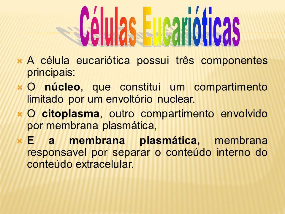 A célula eucariótica possui três componentes principais: O núcleo, que constitui um compartimento limitado por um envoltório nuclear. O citoplasma, ou