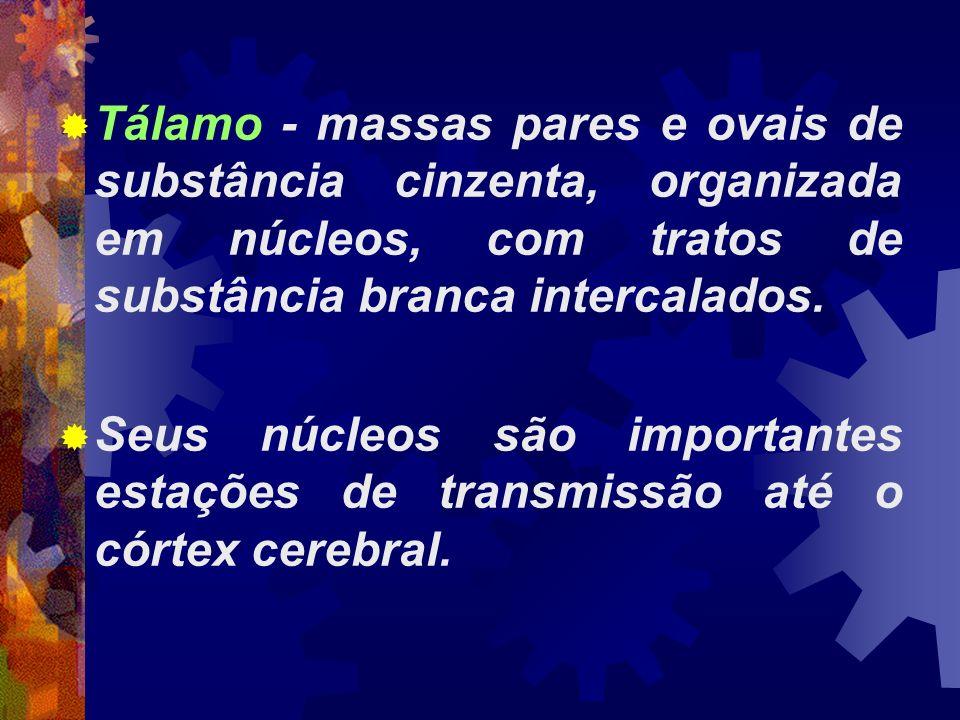 Tálamo - massas pares e ovais de substância cinzenta, organizada em núcleos, com tratos de substância branca intercalados. Seus núcleos são importante
