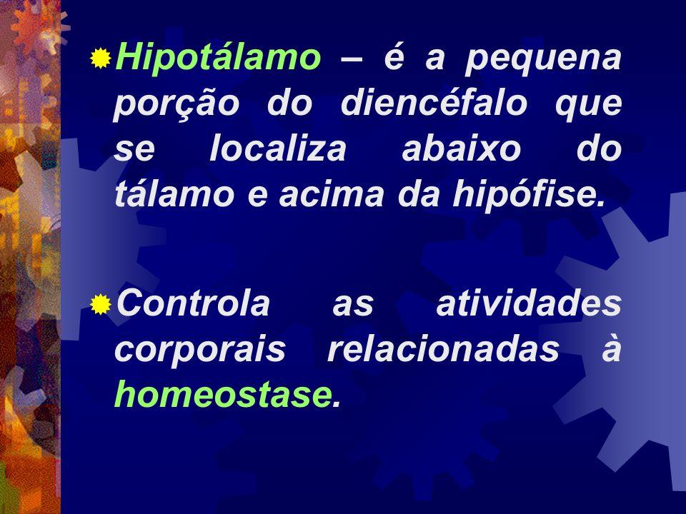 Hipotálamo – é a pequena porção do diencéfalo que se localiza abaixo do tálamo e acima da hipófise. Controla as atividades corporais relacionadas à ho