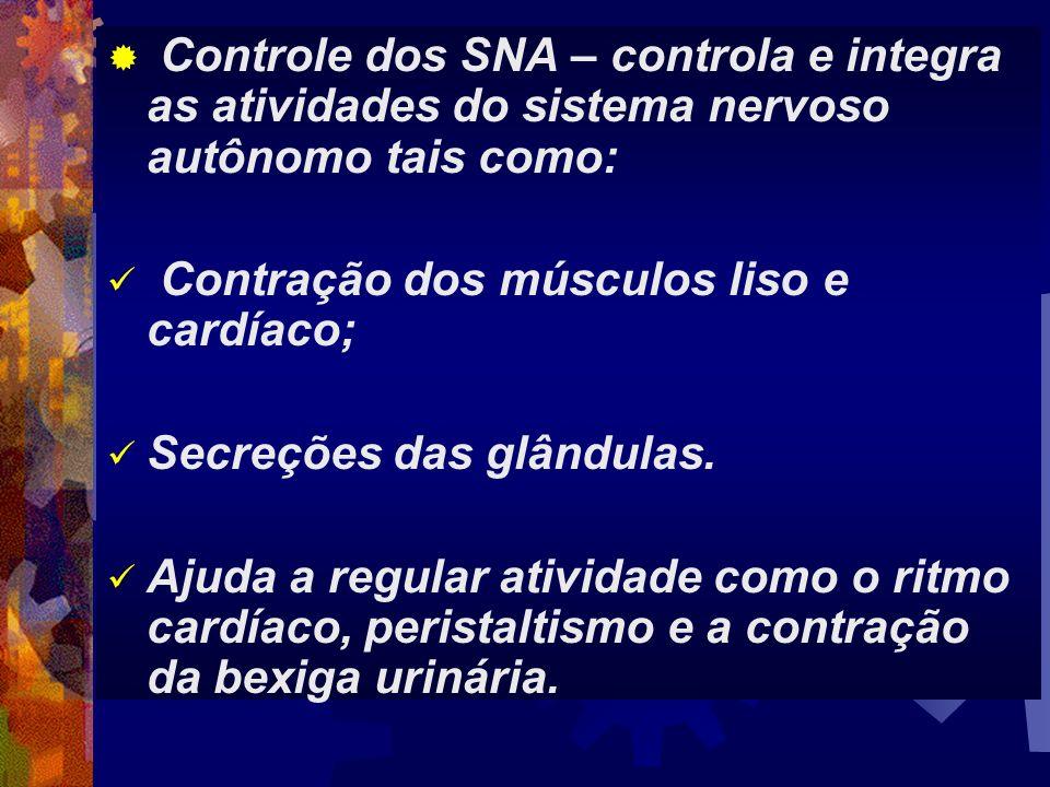 Controle dos SNA – controla e integra as atividades do sistema nervoso autônomo tais como: Contração dos músculos liso e cardíaco; Secreções das glând