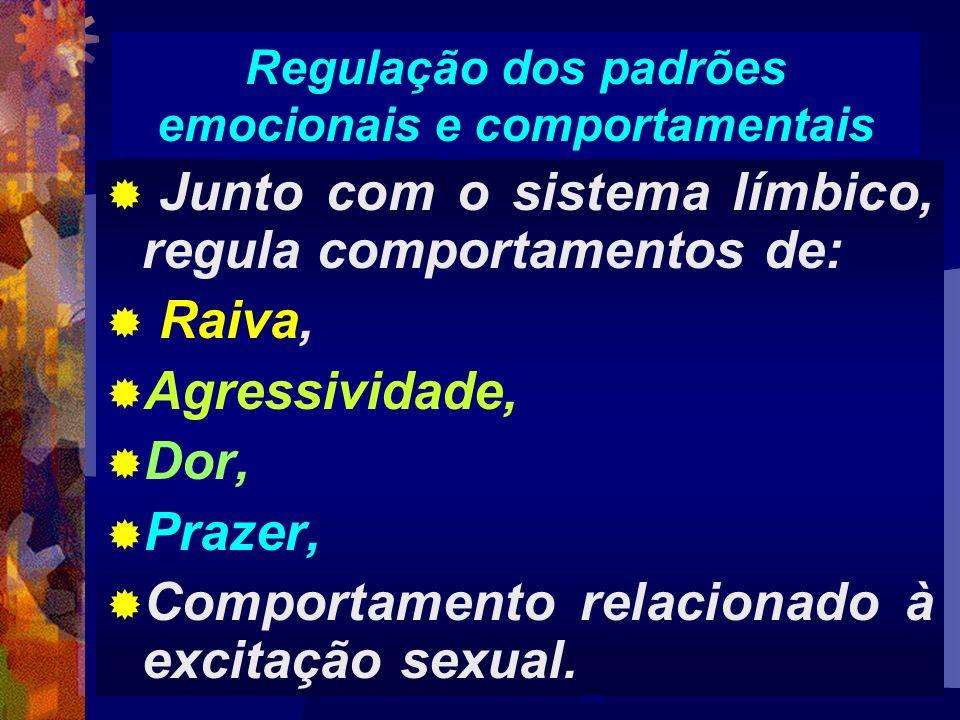 Junto com o sistema límbico, regula comportamentos de: Raiva, Agressividade, Dor, Prazer, Comportamento relacionado à excitação sexual. Regulação dos