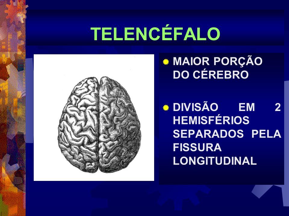 TELENCÉFALO MAIOR PORÇÃO DO CÉREBRO DIVISÃO EM 2 HEMISFÉRIOS SEPARADOS PELA FISSURA LONGITUDINAL