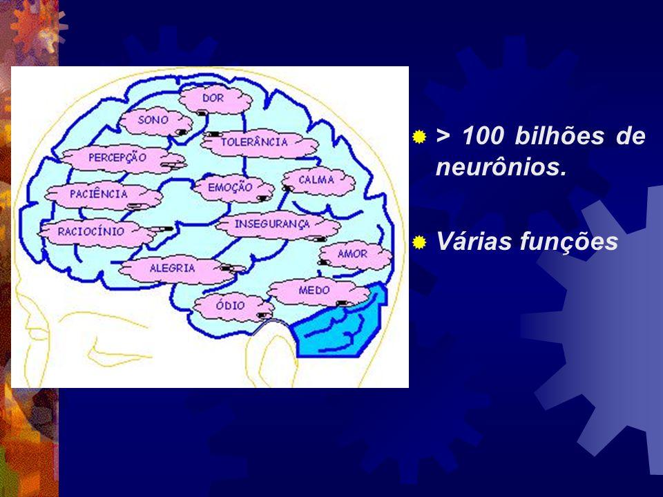 > 100 bilhões de neurônios. Várias funções