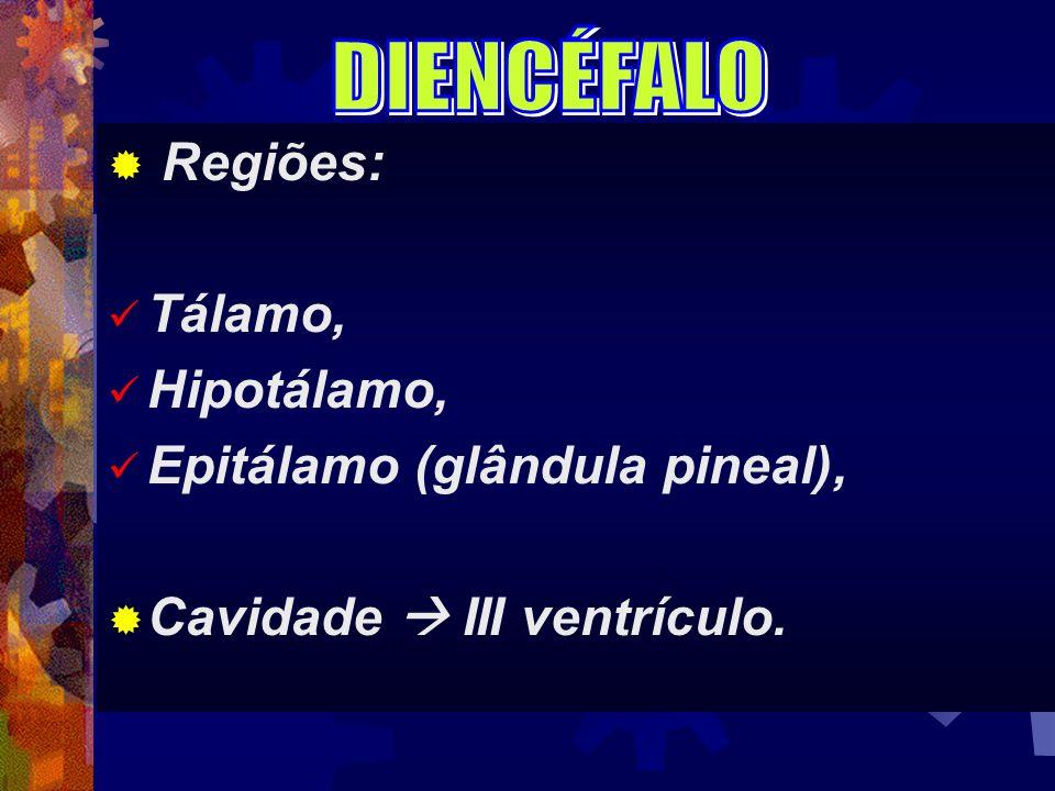 Regiões: Tálamo, Hipotálamo, Epitálamo (glândula pineal), Cavidade III ventrículo.