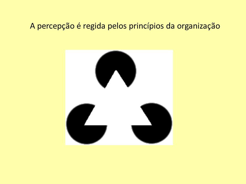 A percepção é regida pelos princípios da organização