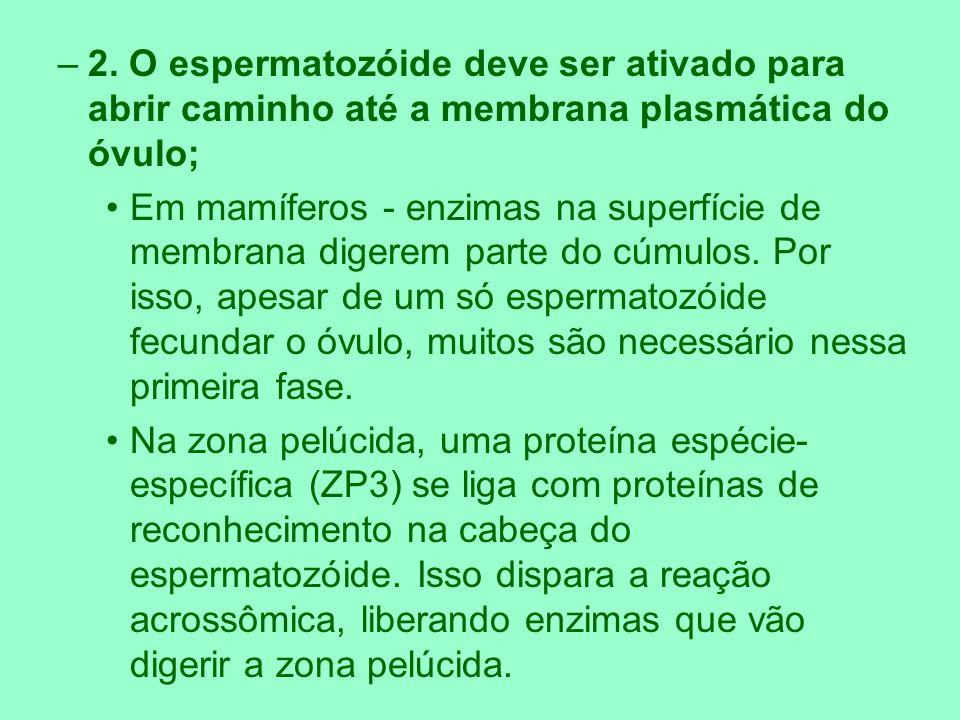 –3.As membranas plasmáticas do óvulo e espermatozóide devem fundir-se.