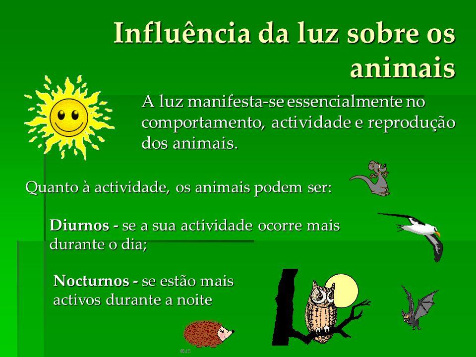 Influência da luz sobre os animais A luz manifesta-se essencialmente no comportamento, actividade e reprodução dos animais.