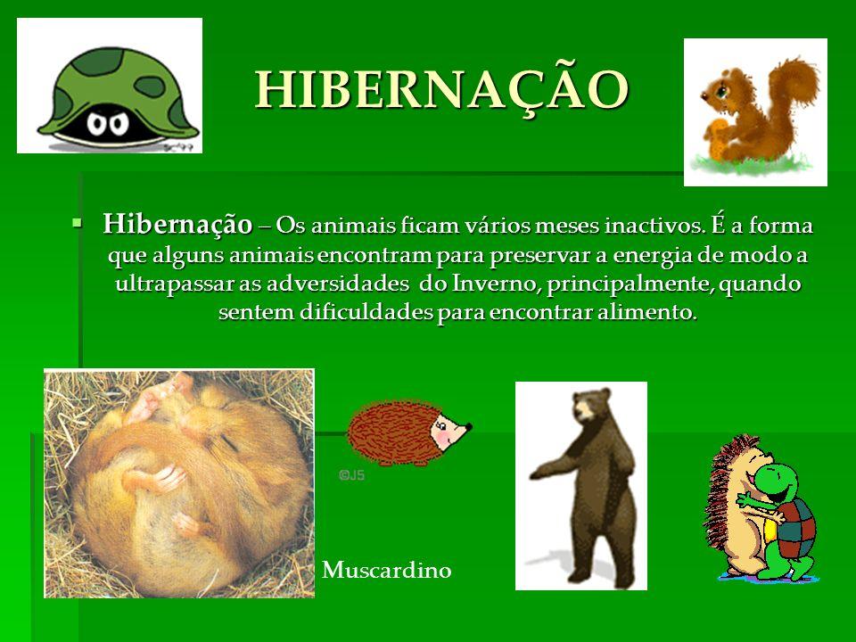 Hibernação – Os animais ficam vários meses inactivos.