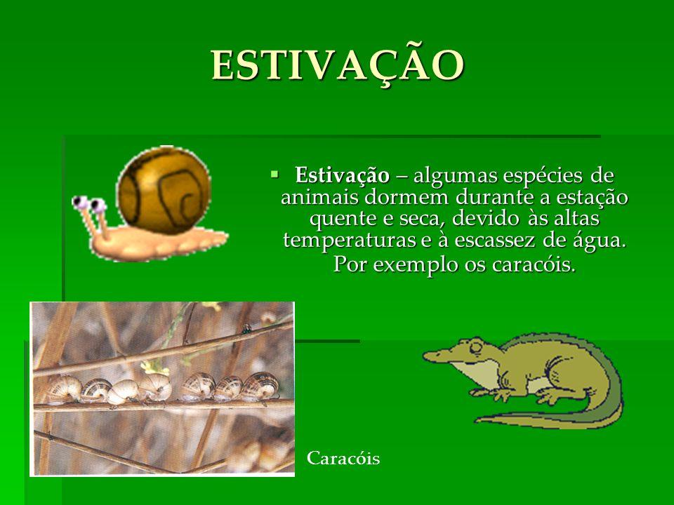 Estivação – algumas espécies de animais dormem durante a estação quente e seca, devido às altas temperaturas e à escassez de água.