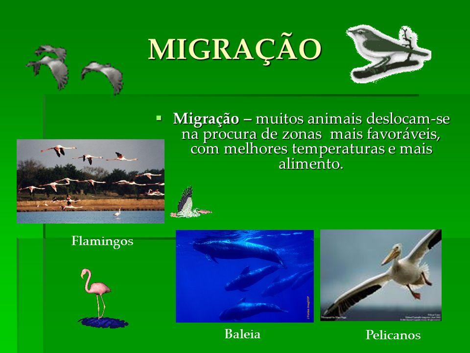 Flamingos Baleia Pelicanos MIGRAÇÃO Migração – muitos animais deslocam-se na procura de zonas mais favoráveis, com melhores temperaturas e mais alimento.