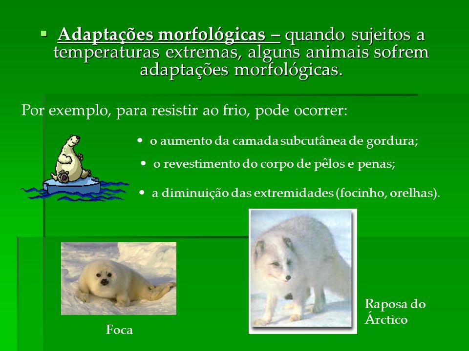 Adaptações morfológicas – quando sujeitos a temperaturas extremas, alguns animais sofrem adaptações morfológicas. Adaptações morfológicas – quando suj