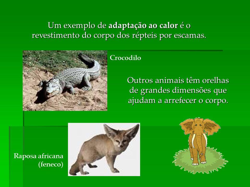 Um exemplo de adaptação ao calor é o revestimento do corpo dos répteis por escamas. Crocodilo Outros animais têm orelhas de grandes dimensões que ajud