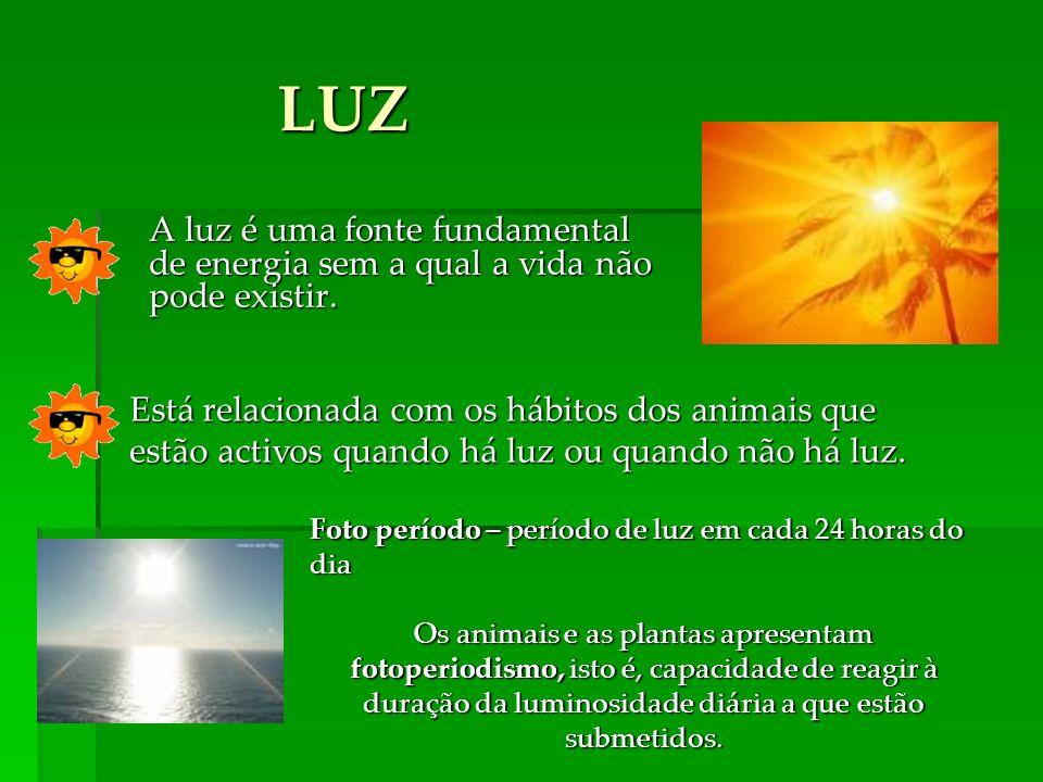 A luz é uma fonte fundamental de energia sem a qual a vida não pode existir. LUZ Foto período – período de luz em cada 24 horas do dia Os animais e as