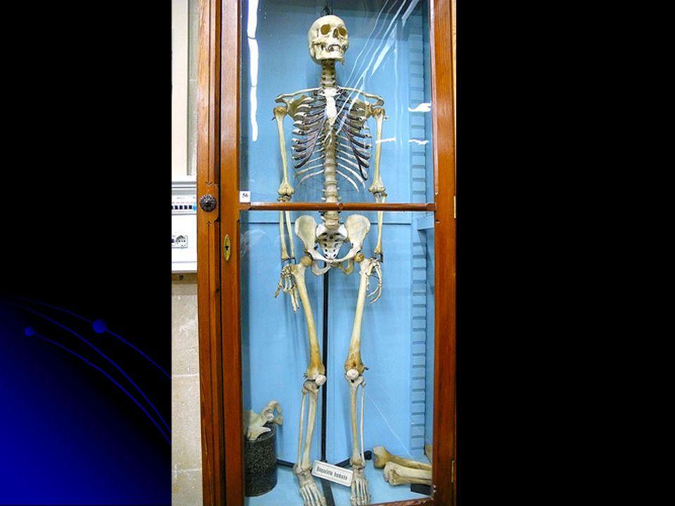 Os historiadores ficaram admirados com o aparecimento do cadáver e da múmia na iconografia*.