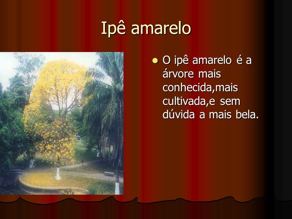 Ipê amarelo O ipê amarelo é a árvore mais conhecida,mais cultivada,e sem dúvida a mais bela. O ipê amarelo é a árvore mais conhecida,mais cultivada,e